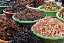 La carne rossa fa male? Gli insetti a tavola pure: l'allarme dell'Efsa