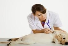Paradosso Napoli: degenti muoiono su una barella d'ospedale, ma è prima in Italia per cura ai cani