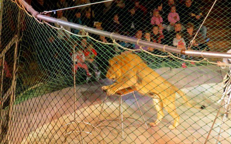Il Governo Conte permette ai circhi di maltrattare ancora gli animali
