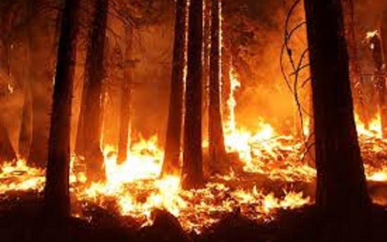 Amazzonia in fiamme, come stanno le cose tra bufale e disinformazione