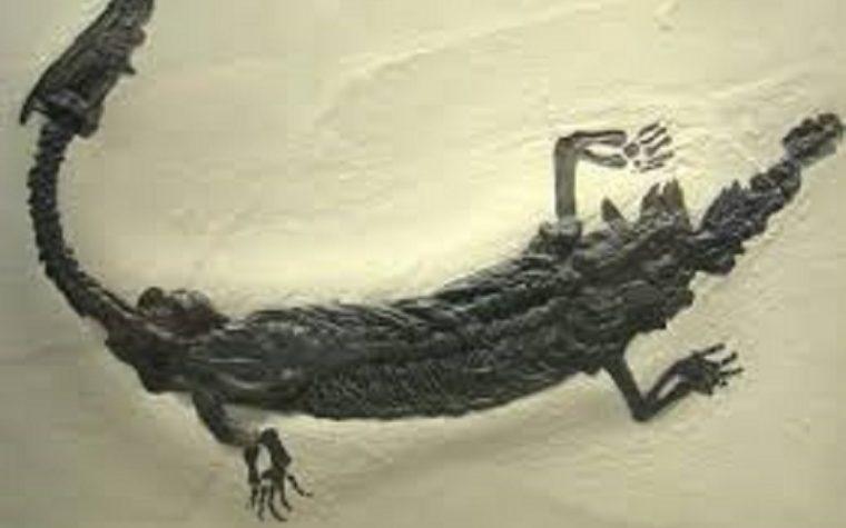 Lago di Como come Loch Ness: il misterioso mostro Lariosauro