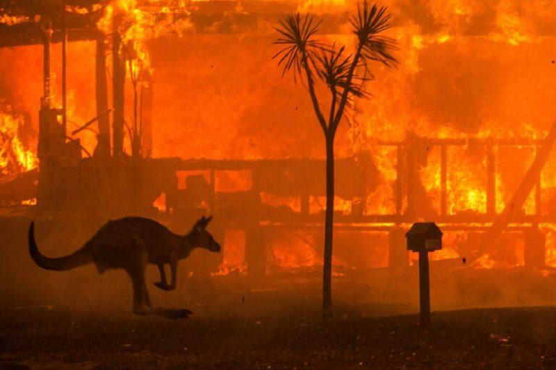 Incendi Australia, non solo siccità: le altre cause dell'apocalisse