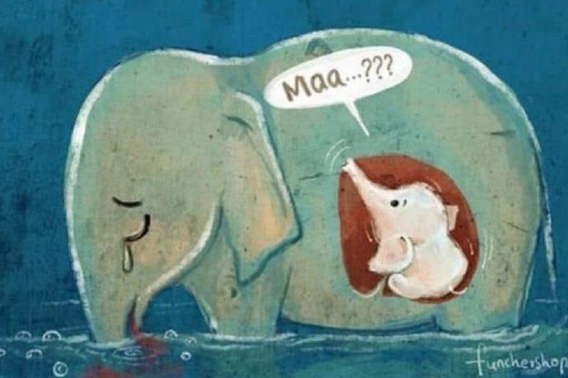 Elefante incinta uccisa da ananas con petardi: le cose stanno un po' diversamente