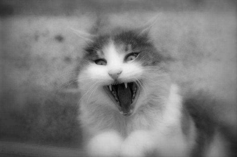 Rabbia, malattia letale per uomini ed animali: sintomi e come si cura