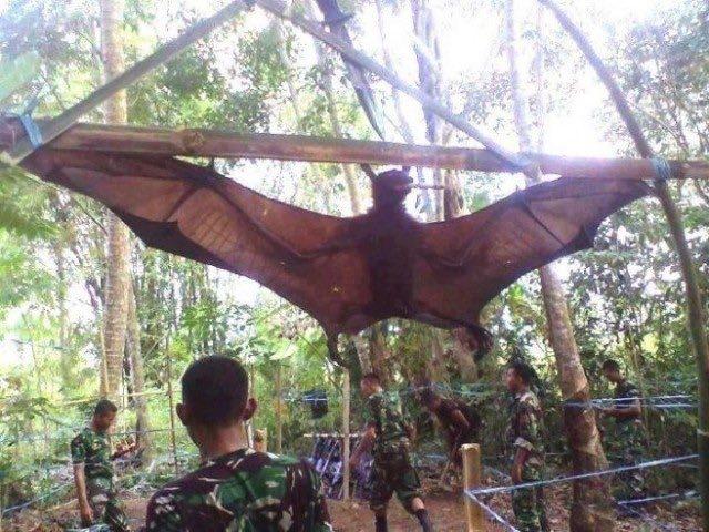 Il pipistrello gigante esiste davvero: le foto inquietanti