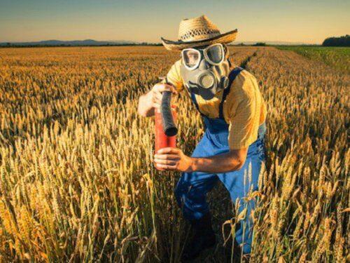 Cucina italiana invasa da grano canadese: i rischi di mangiare questa tipologia