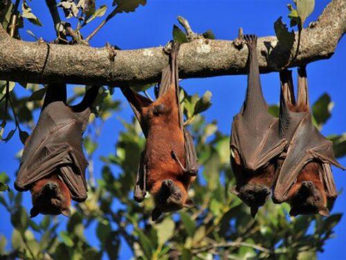 Distanziamento sociale, lo fanno anche gli animali per tutelarsi: quali specie