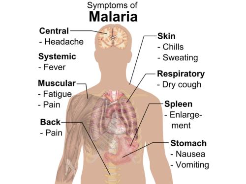 Vaccino contro Malaria: perché è un successo con molte preoccupazioni